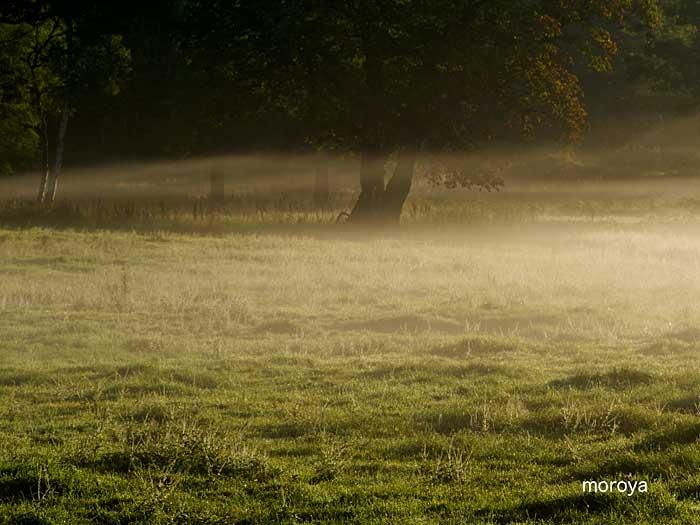 霧たなびく_c0085877_6585266.jpg