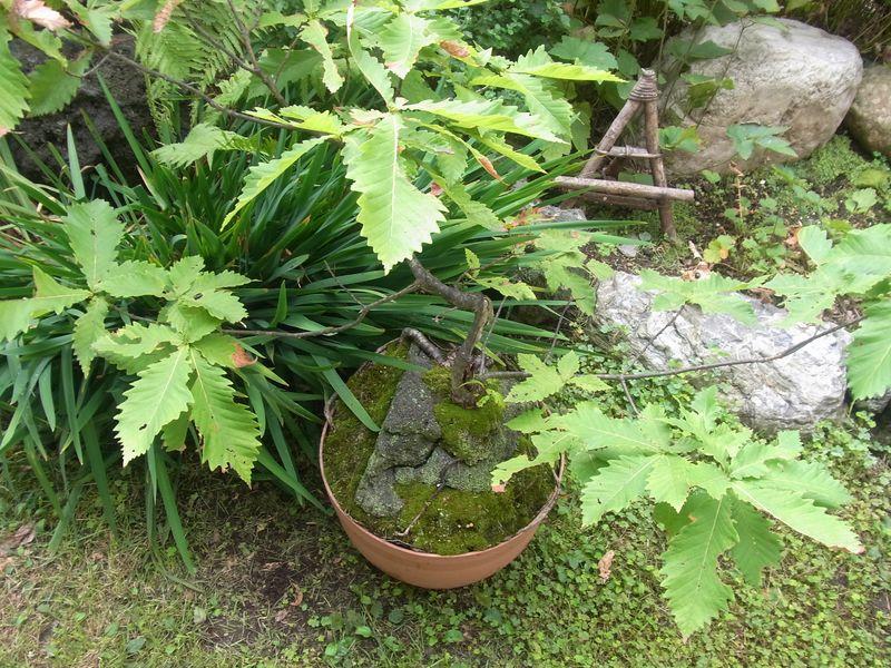 秋の風景_c0025115_1959440.jpg