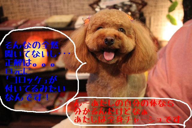b0130018_9121433.jpg