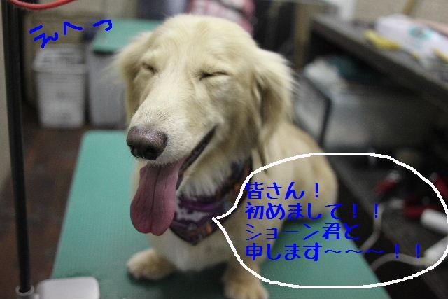 b0130018_965860.jpg