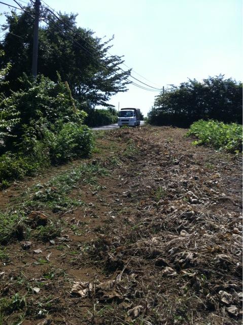 今日も晴天 夏日より・・・雑草を刈ります _c0222448_13505380.jpg