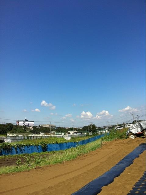 今日も晴天 夏日より・・・雑草を刈ります _c0222448_13512084.jpg