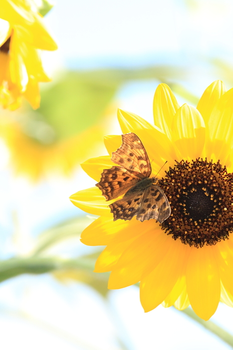 ■■ 夏と秋のはざまに ~2~ ■■_c0195662_23233321.jpg