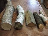 木ときのこ_a0085381_2149352.jpg