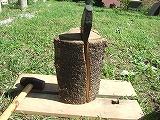 木ときのこ_a0085381_21502939.jpg