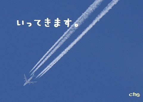 a0133388_1823171.jpg
