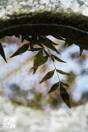 写りこみ~Leaf_b0208495_22355472.jpg