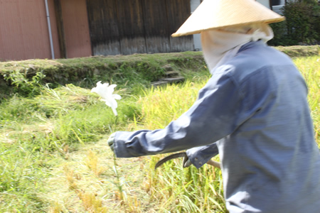 稲刈り2011_d0063218_1417085.jpg