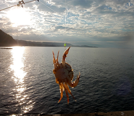 本州の果て大間崎、本マグロを釣り上げろ!の旅【3】_e0071652_56477.jpg