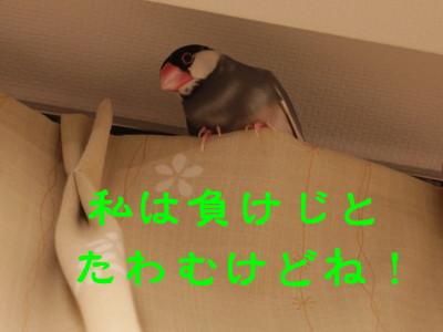 b0158061_21293388.jpg