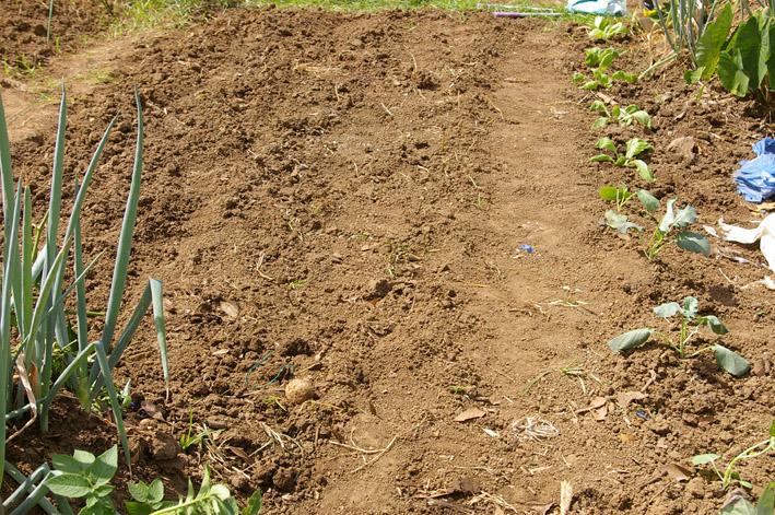 残暑の中、大根、キャベツ、タマネギの種まき済ませる9・16_c0014967_18184825.jpg