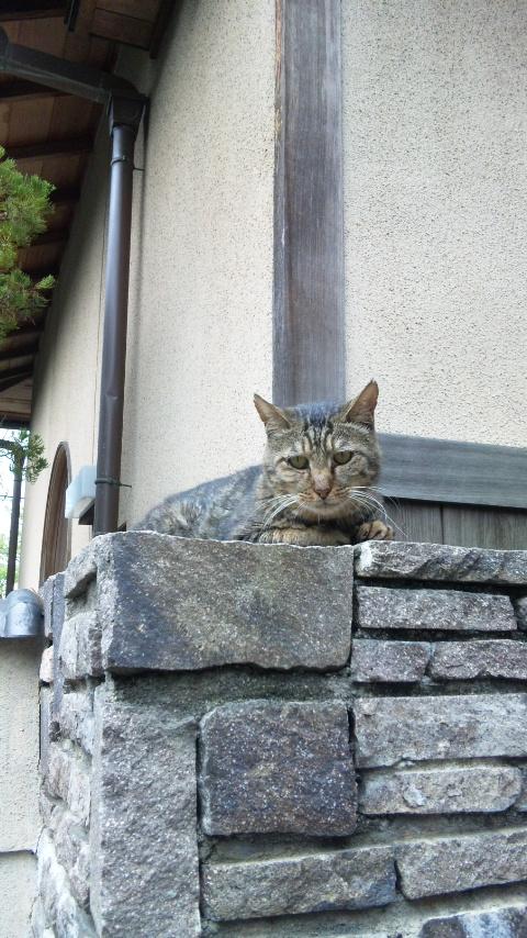 近所のコテツちゃん_c0066368_20331577.jpg