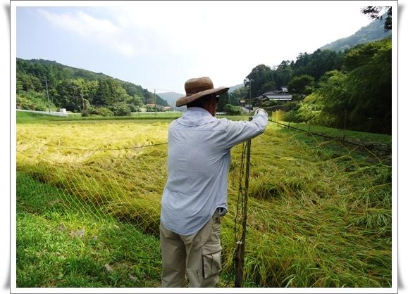稲刈り_a0199979_1658283.jpg
