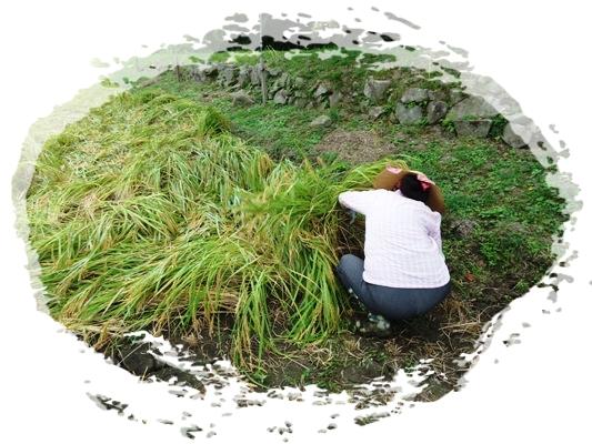 稲刈り_a0199979_1715380.jpg