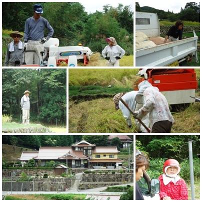 稲刈り_a0199979_17184510.jpg