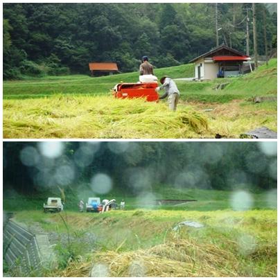稲刈り_a0199979_17233399.jpg