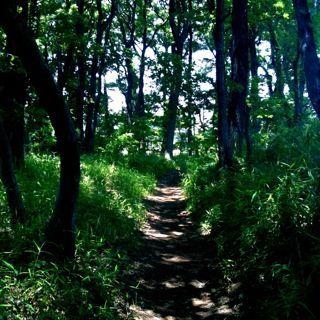 森に還ろう_c0161496_051236.jpg