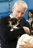 飼い主のいるコロラドから2600Km離れたニューヨークで発見された猫ちゃん_b0007805_2133391.jpg