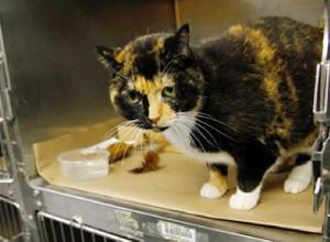 飼い主のいるコロラドから2600Km離れたニューヨークで発見された猫ちゃん_b0007805_2134341.jpg