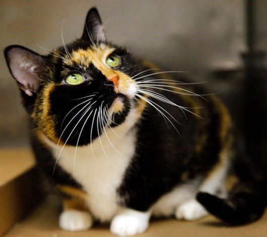 飼い主のいるコロラドから2600Km離れたニューヨークで発見された猫ちゃん_b0007805_213667.jpg