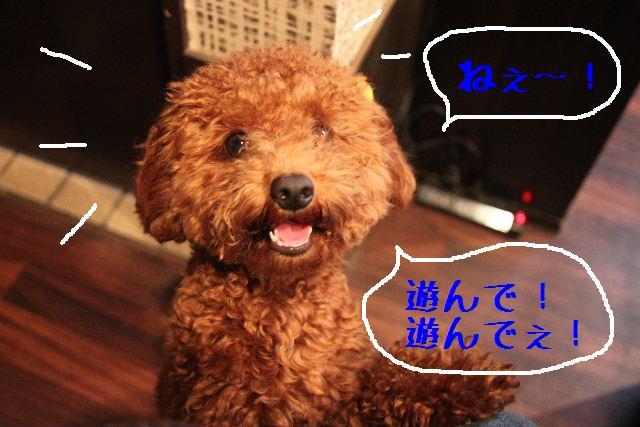 b0130018_9103279.jpg