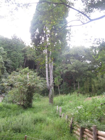 「greengreenvillage日田」へ~~_a0125419_2243823.jpg