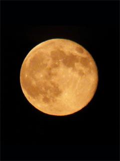 風流に月見をしてみる の巻_c0053520_8465410.jpg