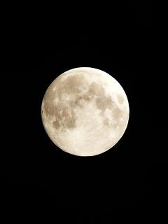 風流に月見をしてみる の巻_c0053520_93536.jpg