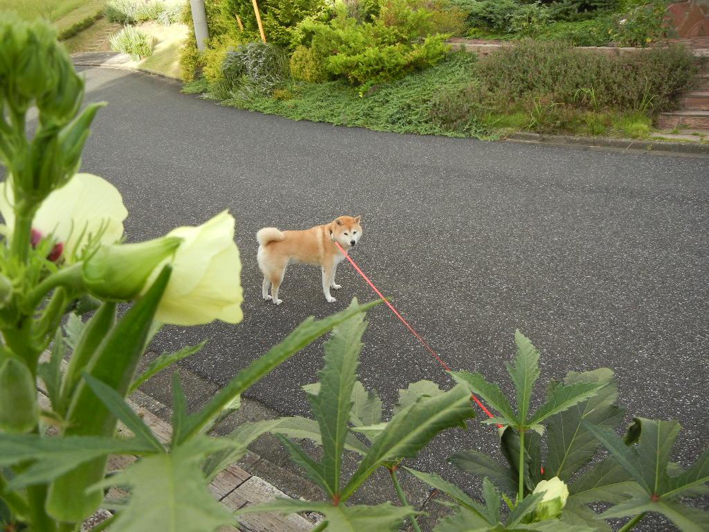 2011年9月17日(土)台風の影響!_f0060461_1136823.jpg