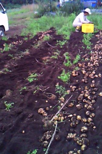 ジャガイモ掘り強化週間_c0110869_19461317.jpg