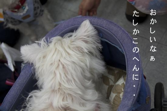 b0130271_22404641.jpg