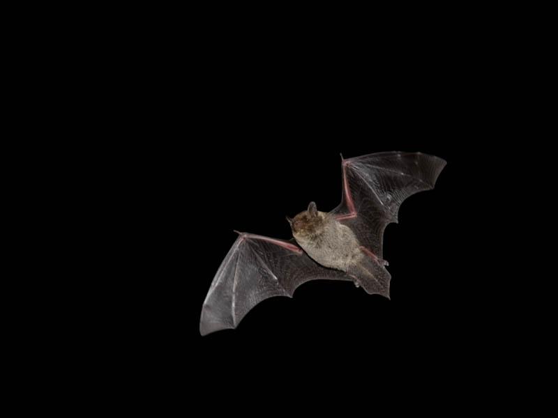 「コウモリの話と観察会」開催!_d0121678_17153517.jpg