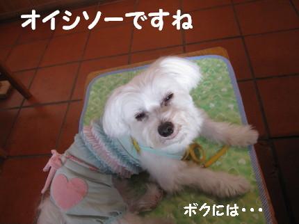 b0193480_1712260.jpg