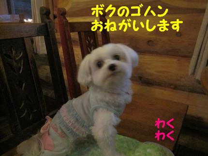 b0193480_17132450.jpg