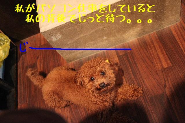 b0130018_9223076.jpg