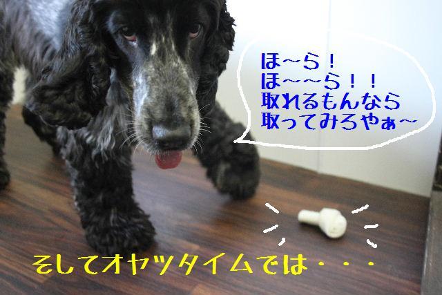 b0130018_925036.jpg
