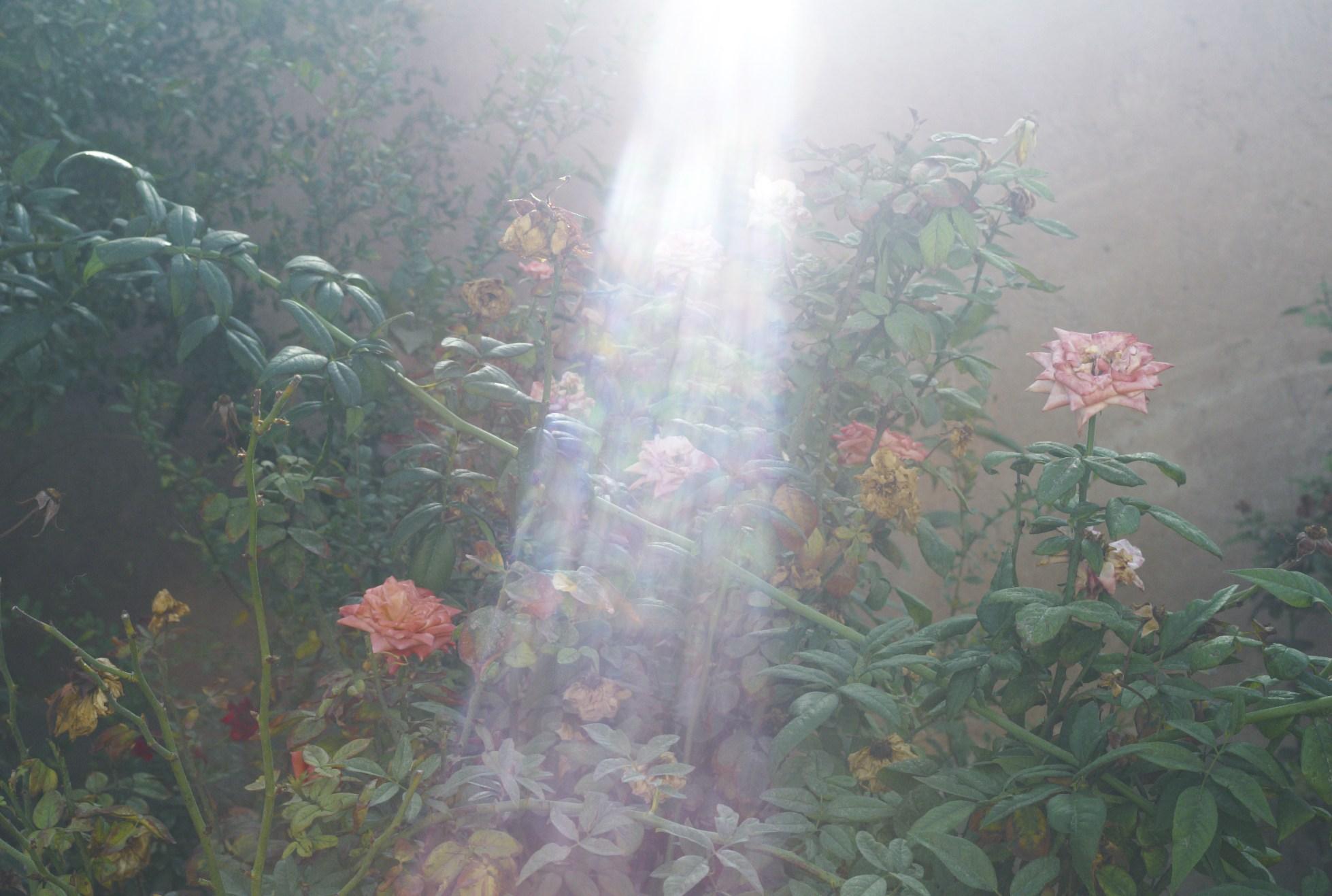 マラケシュに咲く花_b0212922_122699.jpg