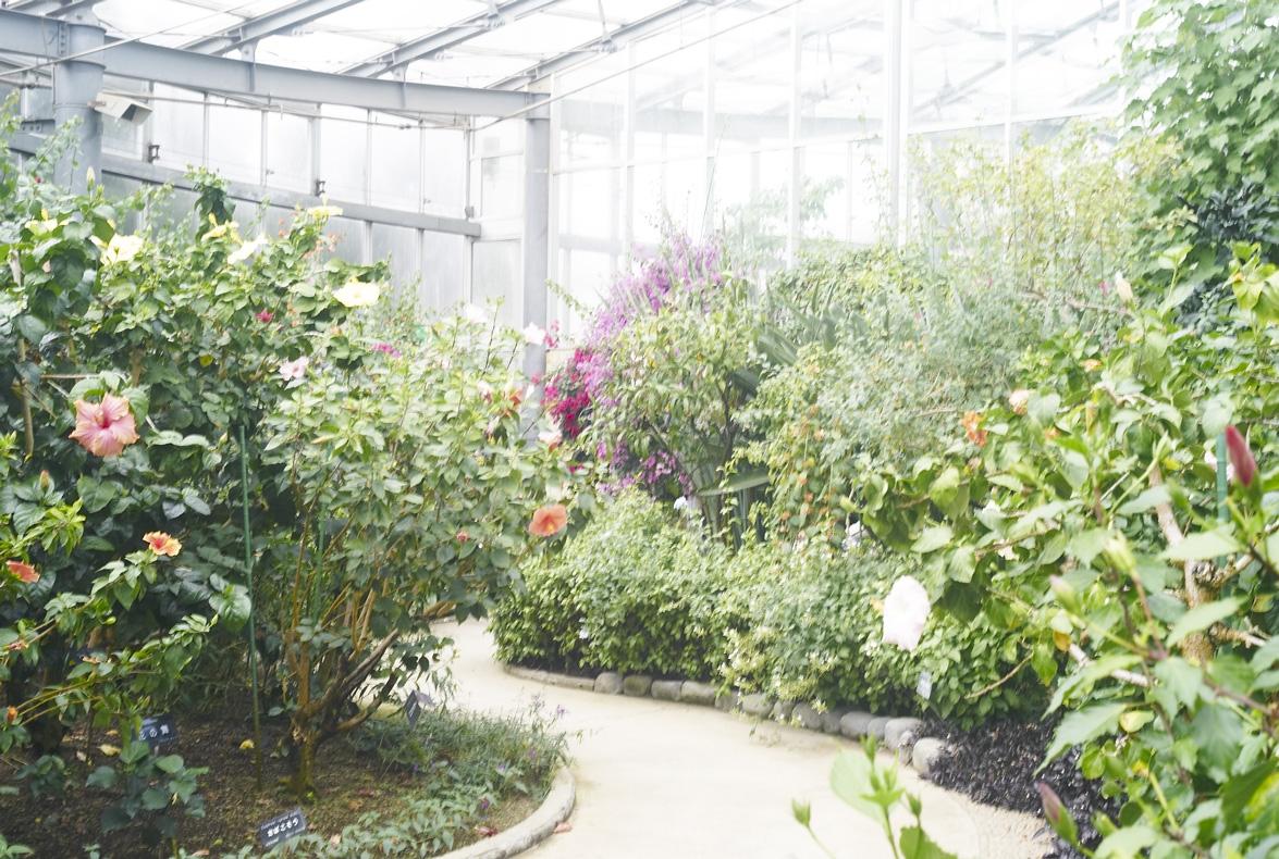 植物園へ行く_b0212922_2310198.jpg