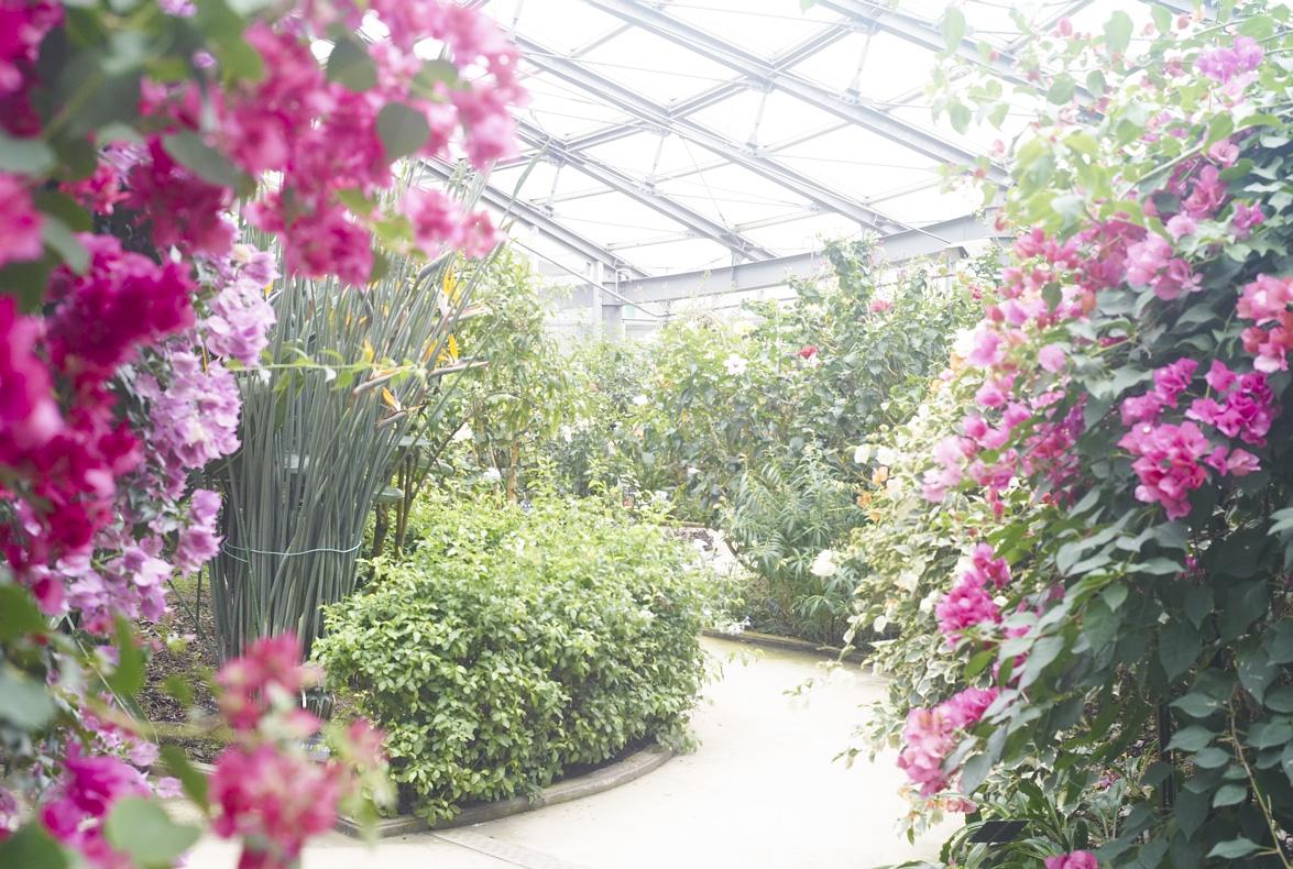 植物園へ行く_b0212922_2310959.jpg