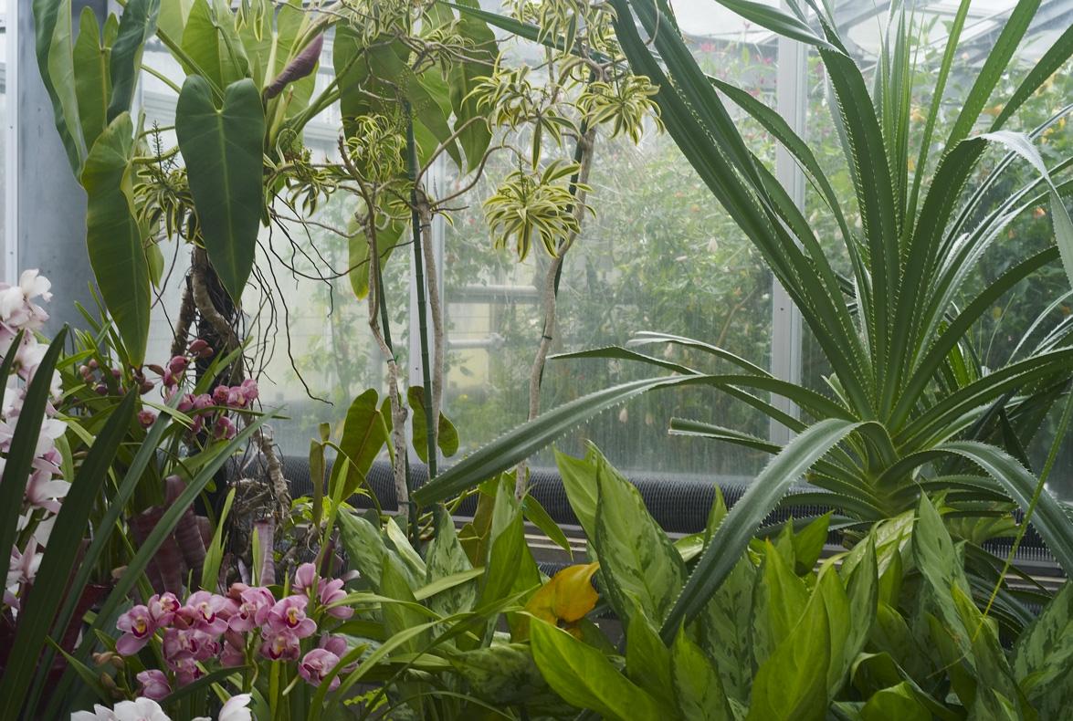 植物園へ行く_b0212922_2394837.jpg