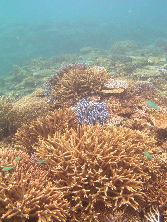 サンゴも魚もいっぱい!!_a0189838_21171882.jpg