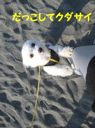 b0193480_1655969.jpg