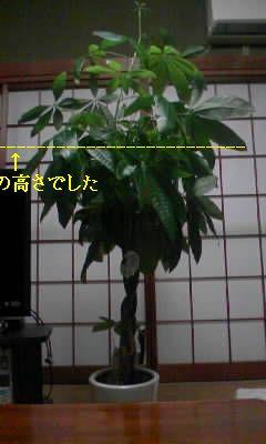 a0161310_11184744.jpg