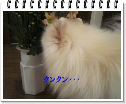 b0167519_15233763.jpg