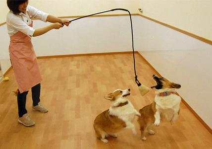 犬釣り名人のいる店 _e0236430_1221387.jpg