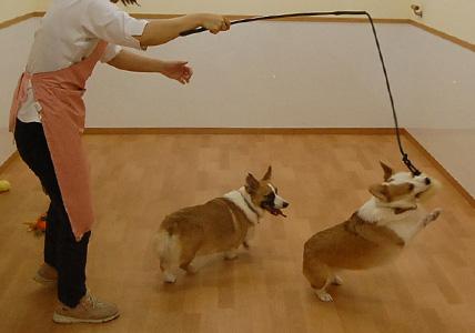 犬釣り名人のいる店 _e0236430_1242176.jpg