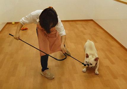 犬釣り名人のいる店 _e0236430_1282366.jpg