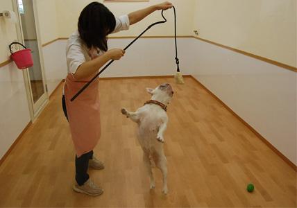 犬釣り名人のいる店 _e0236430_1282492.jpg