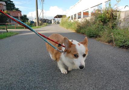 けさのお散歩の様子_e0236430_2214990.jpg
