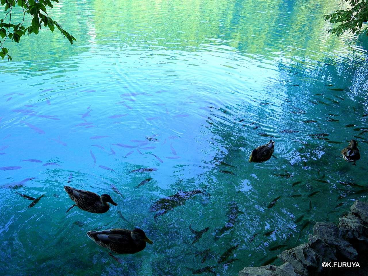 プリトヴィツェ湖群 国立公園 _a0092659_23172829.jpg